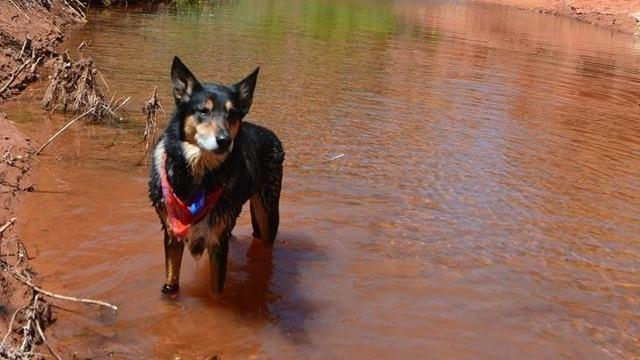 Dog in Water | Mesa Veterinary Hospital