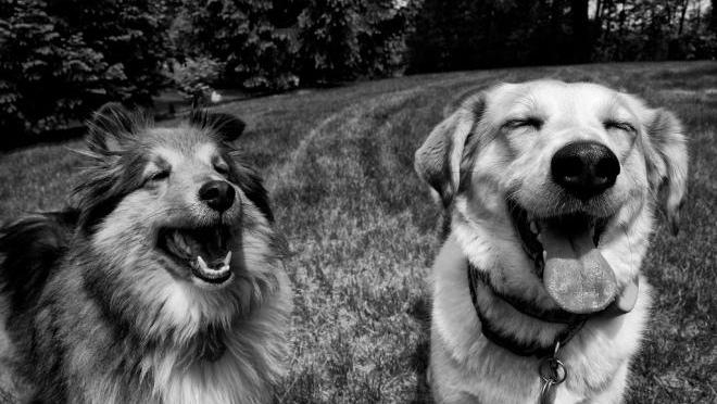 Two Dogs Smiling | Mesa Veterinary Hospital